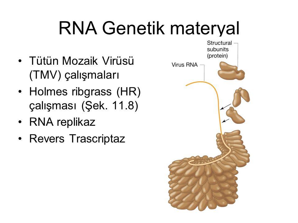 RNA Genetik materyal Tütün Mozaik Virüsü (TMV) çalışmaları
