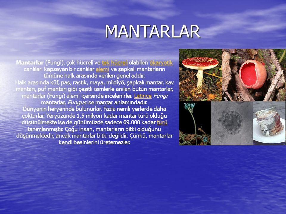 MANTARLAR