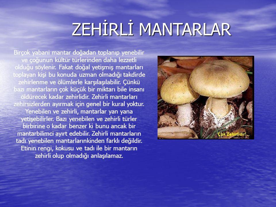 ZEHİRLİ MANTARLAR