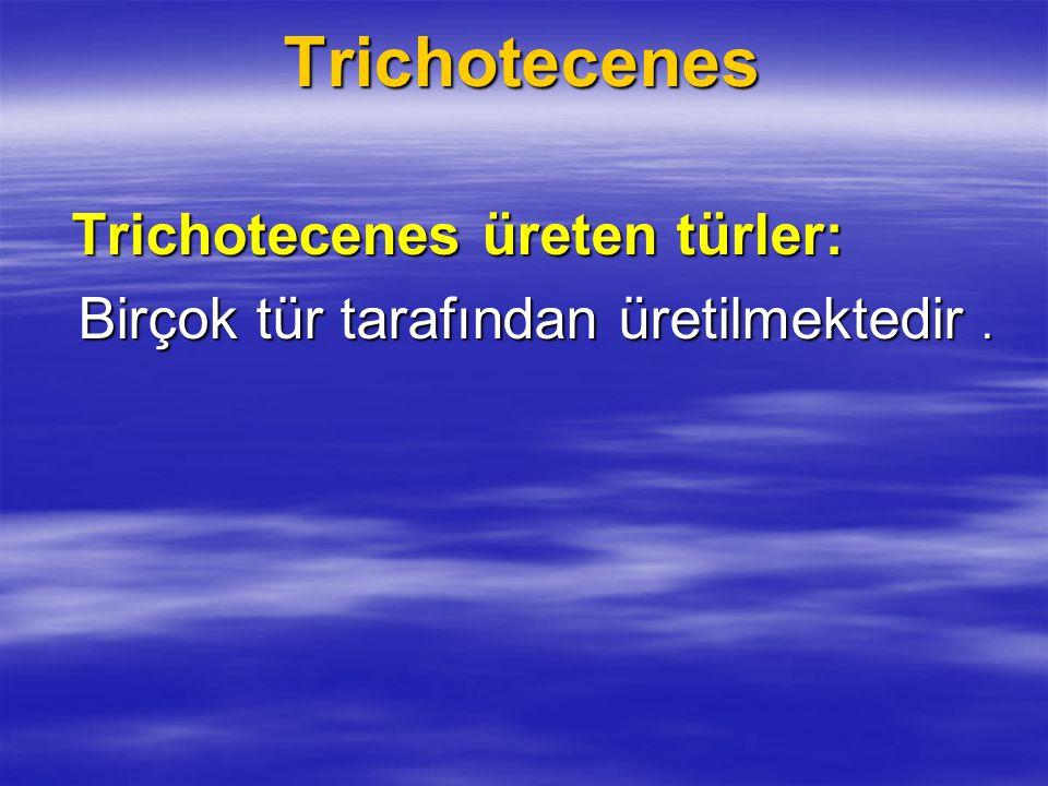 Trichotecenes Birçok tür tarafından üretilmektedir .