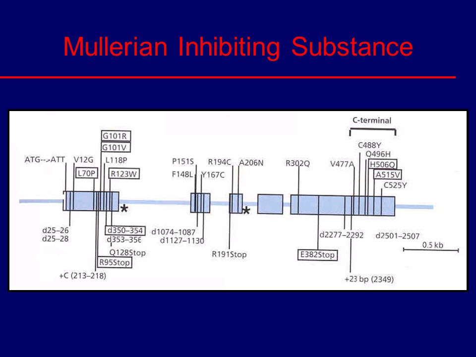 Mullerian Inhibiting Substance