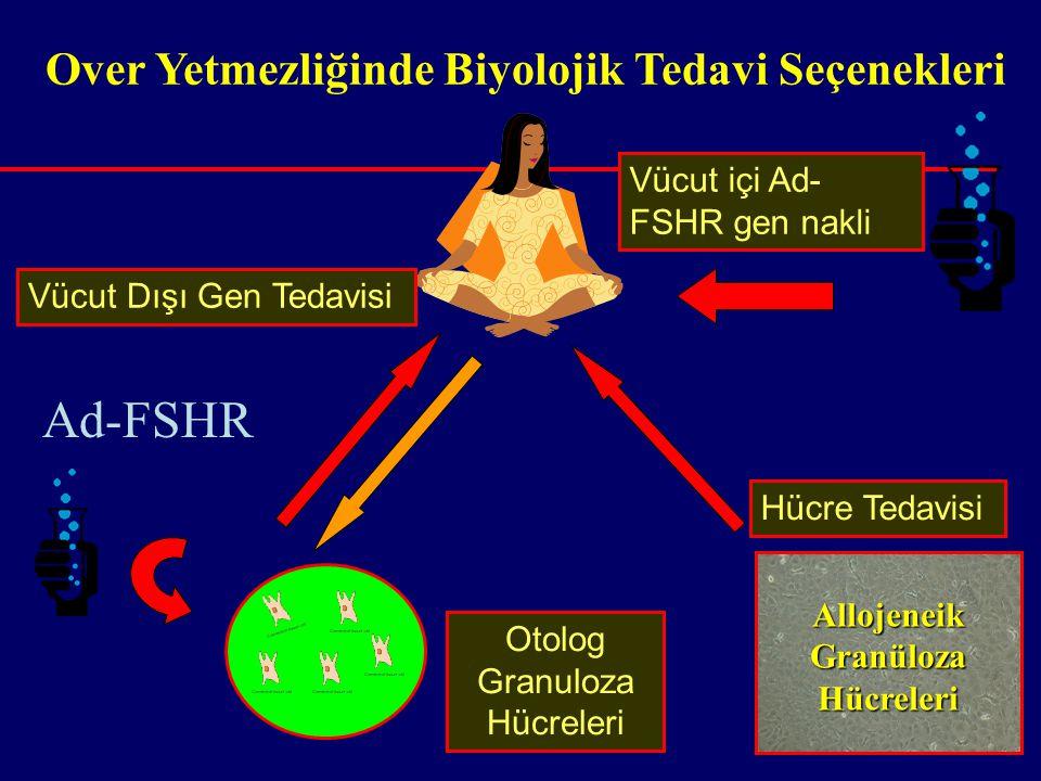 Allojeneik Granüloza Hücreleri