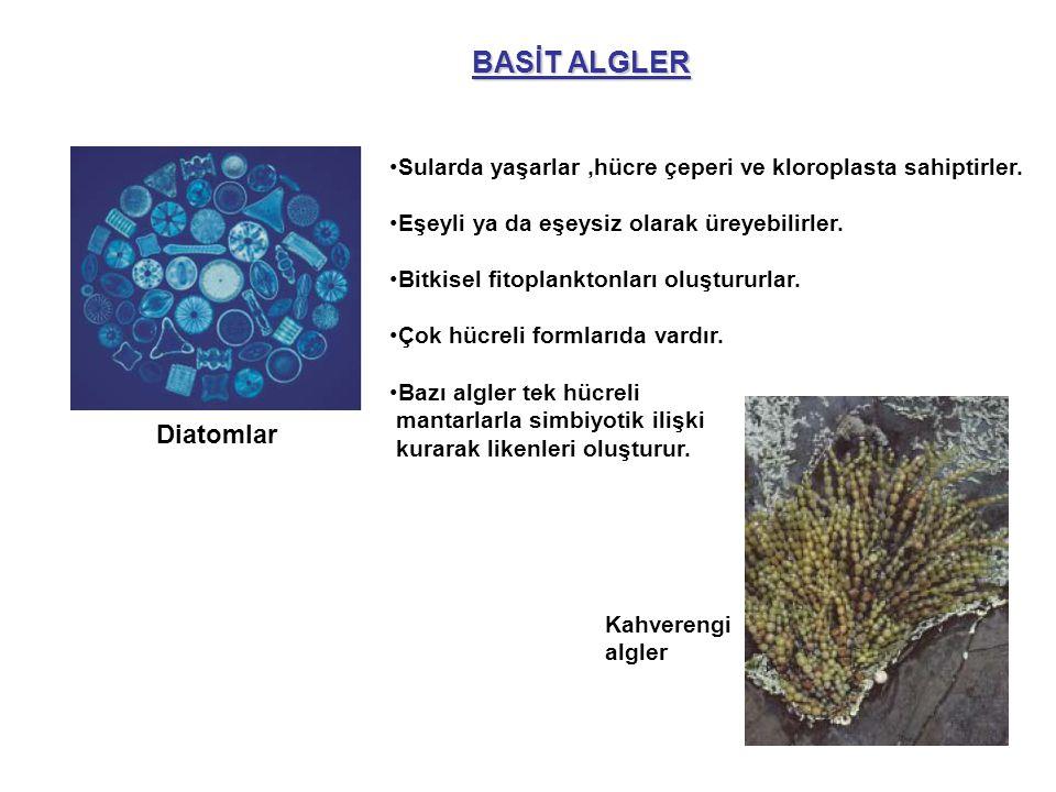 BASİT ALGLER Diatomlar