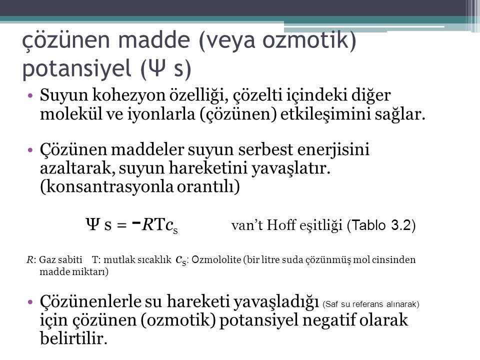 çözünen madde (veya ozmotik) potansiyel (Ψ s)