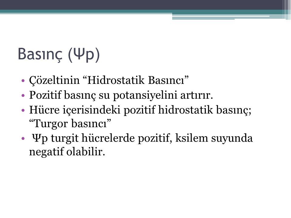 Basınç (Ψp) Çözeltinin Hidrostatik Basıncı