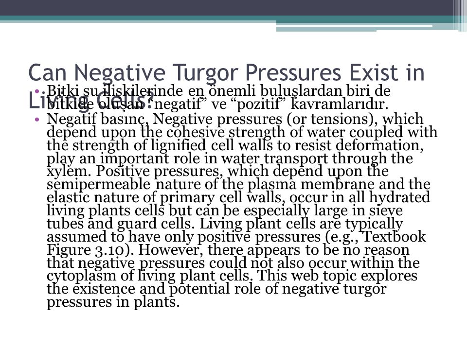 Can Negative Turgor Pressures Exist in Living Cells