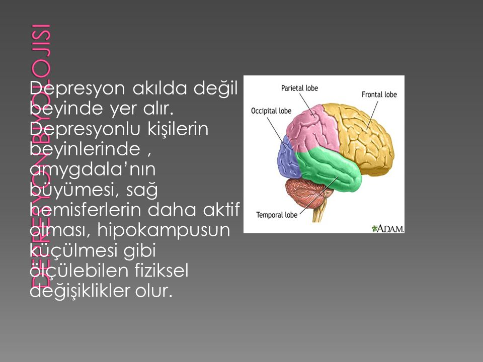 Depresyon biyolojisi Depresyon akılda değil beyinde yer alır.
