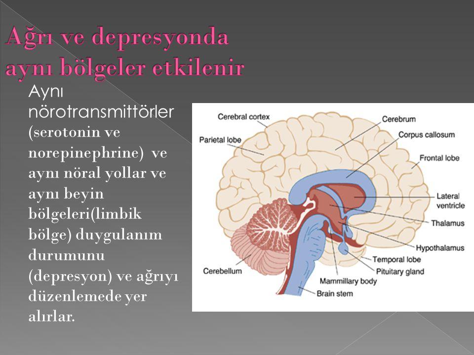 Ağrı ve depresyonda aynı bölgeler etkilenir