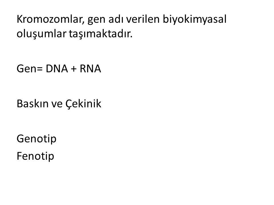 Kromozomlar, gen adı verilen biyokimyasal oluşumlar taşımaktadır