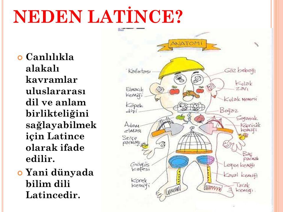 NEDEN LATİNCE Canlılıkla alakalı kavramlar uluslararası dil ve anlam birlikteliğini sağlayabilmek için Latince olarak ifade edilir.
