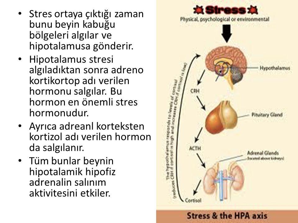 Stres ortaya çıktığı zaman bunu beyin kabuğu bölgeleri algılar ve hipotalamusa gönderir.