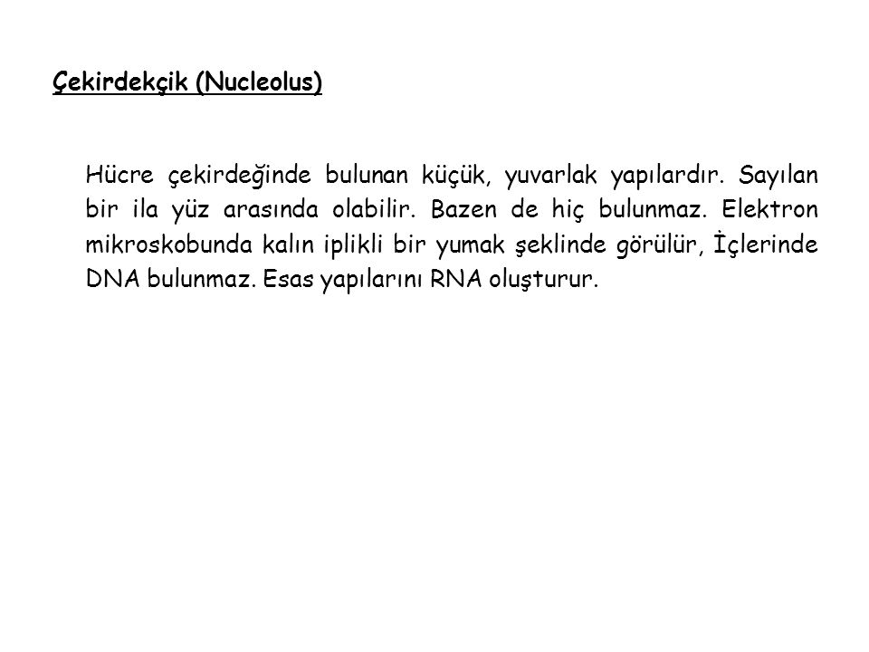 Çekirdekçik (Nucleolus)