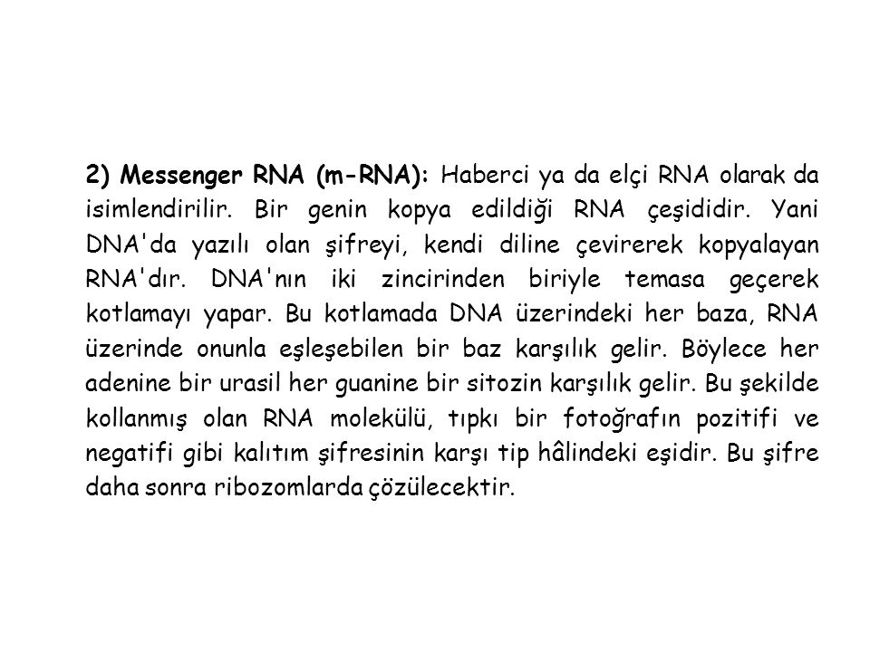 2) Messenger RNA (m-RNA): Haberci ya da elçi RNA olarak da isimlendirilir.