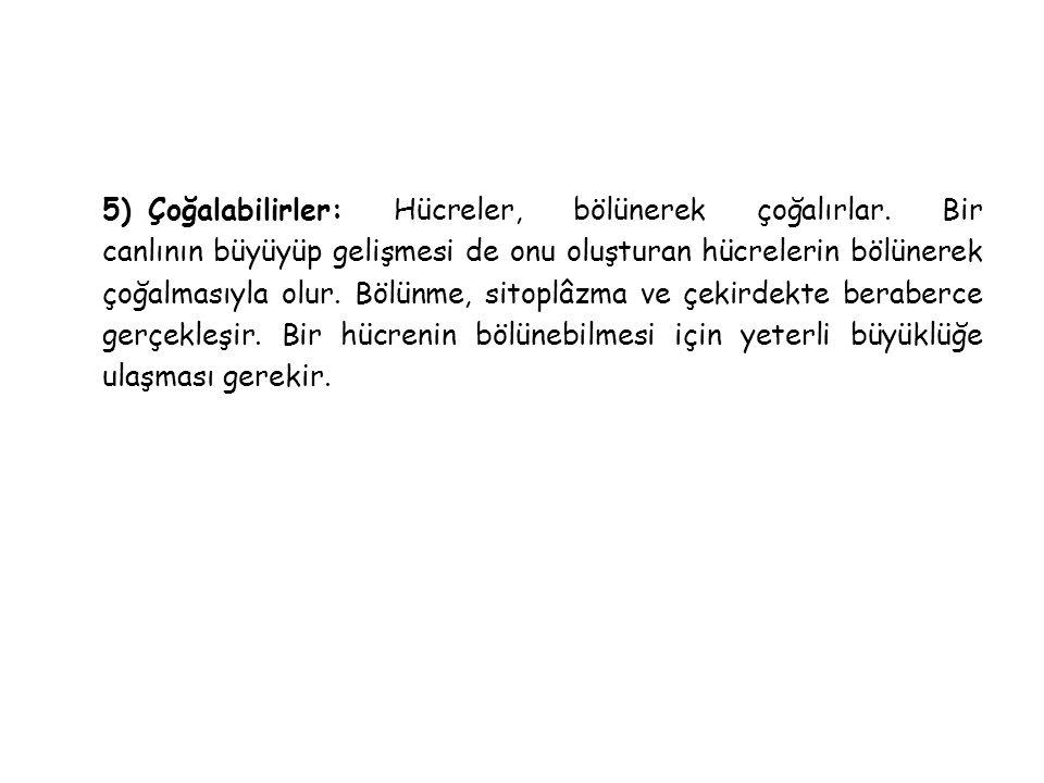 5) Çoğalabilirler: Hücreler, bölünerek çoğalırlar