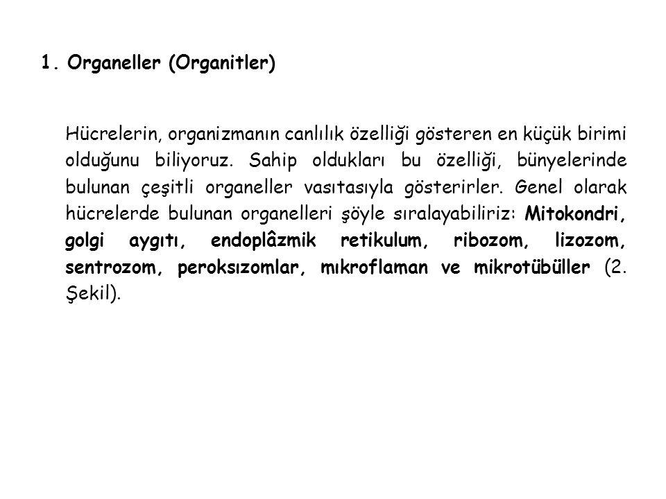 1. Organeller (Organitler)