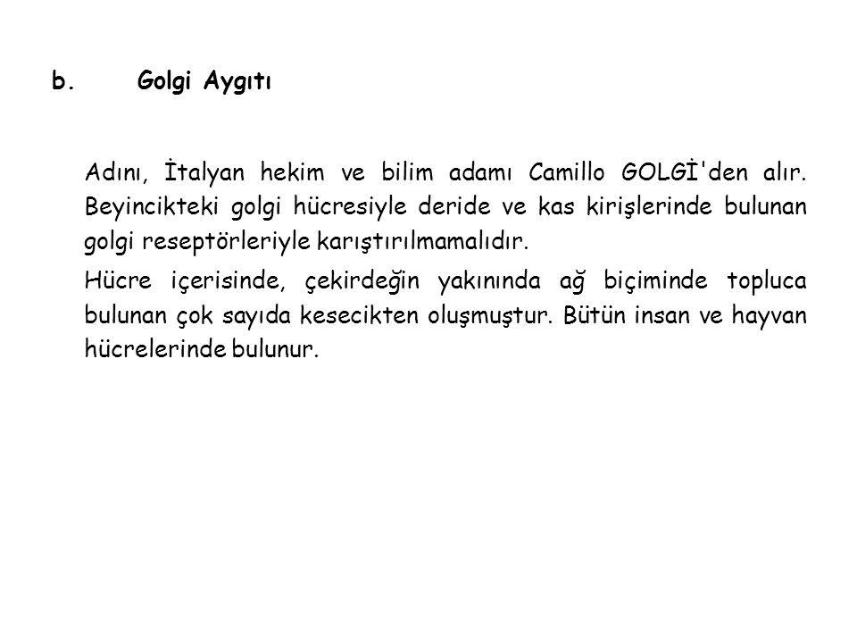 b. Golgi Aygıtı