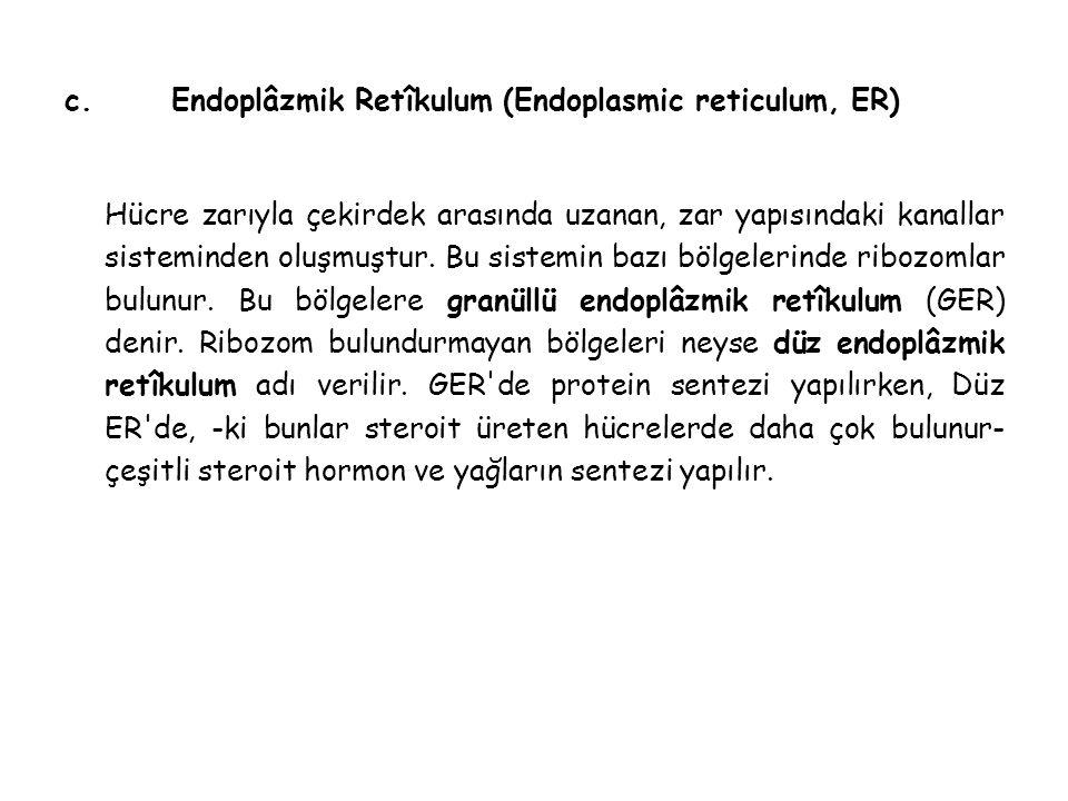 c. Endoplâzmik Retîkulum (Endoplasmic reticulum, ER)