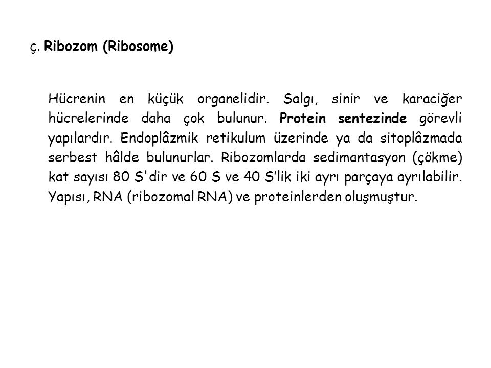 ç. Ribozom (Ribosome)