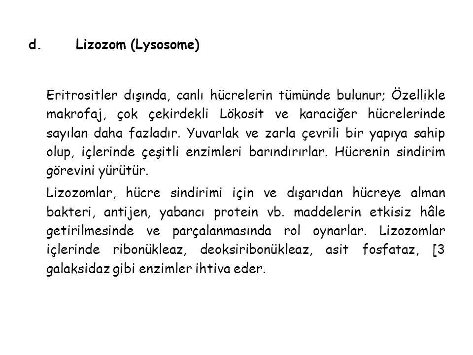 d. Lizozom (Lysosome)