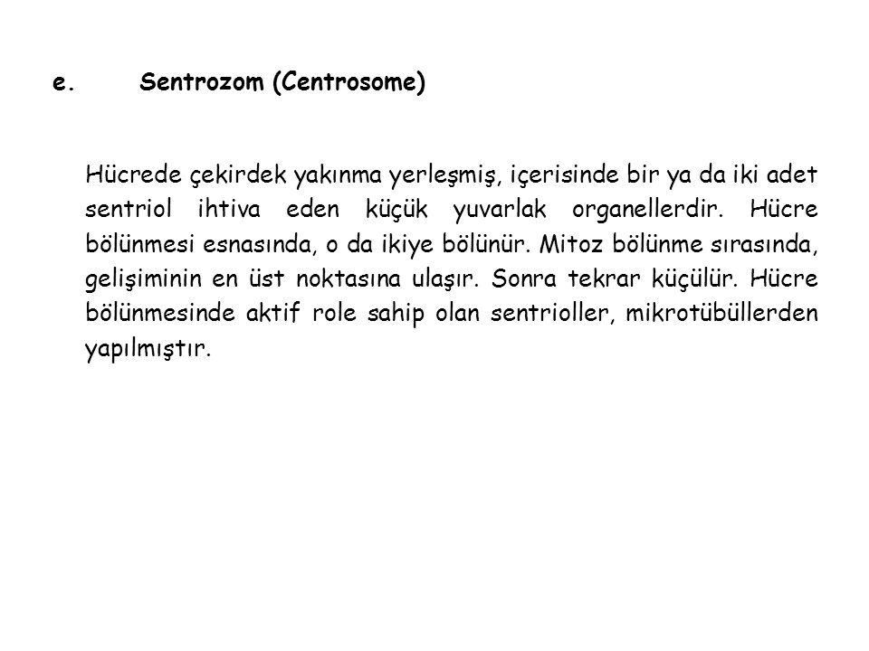 e. Sentrozom (Centrosome)