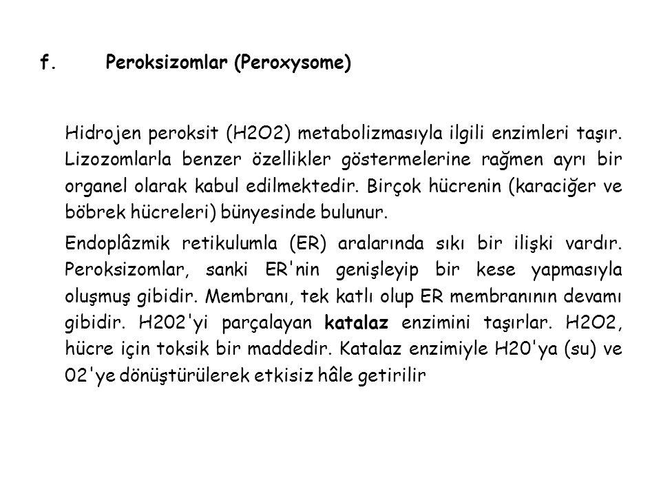 f. Peroksizomlar (Peroxysome)