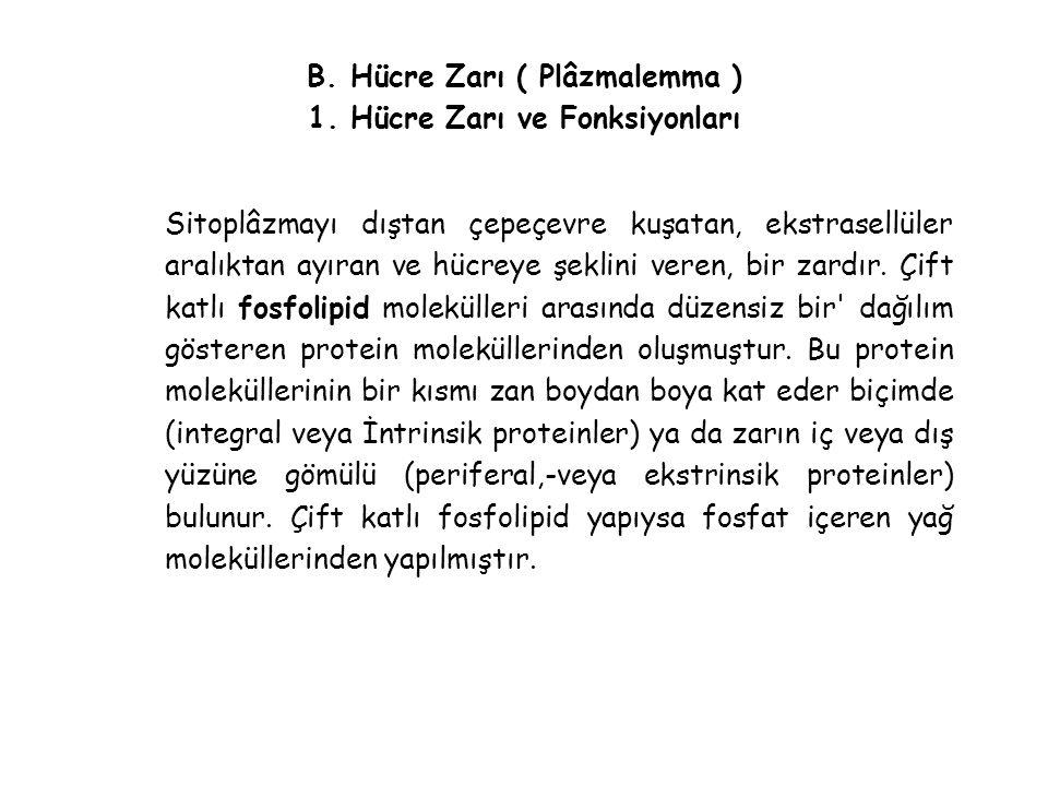 B. Hücre Zarı ( Plâzmalemma ) 1. Hücre Zarı ve Fonksiyonları