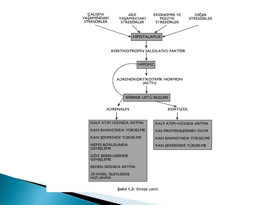 Strese yanıtta rol alan temel hormonlar kortizol ve adrenalindir. Her