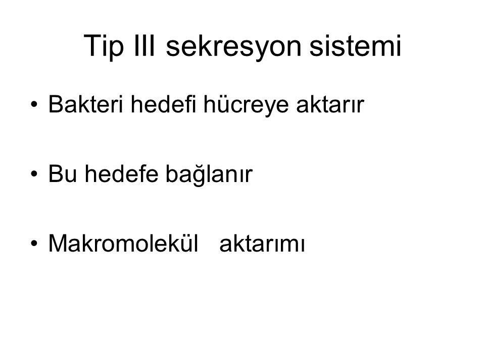 Tip III sekresyon sistemi