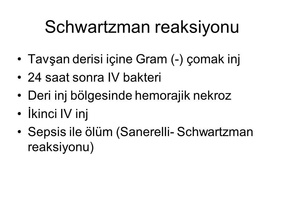 Schwartzman reaksiyonu