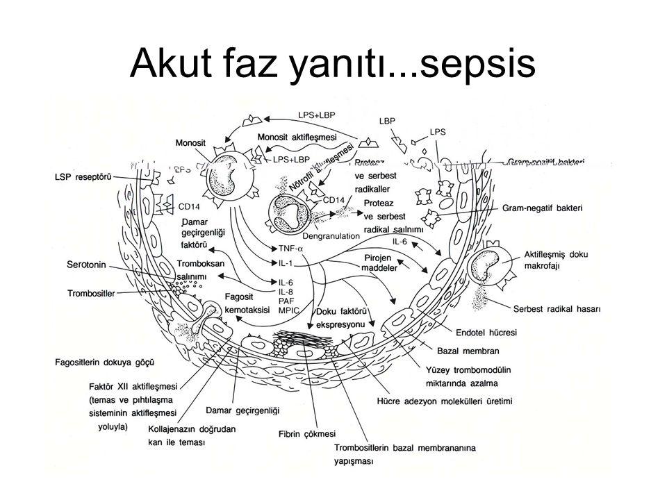 Akut faz yanıtı...sepsis