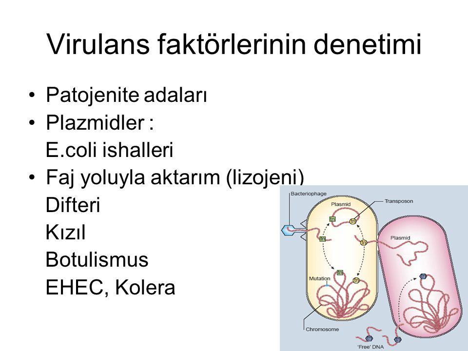 Virulans faktörlerinin denetimi