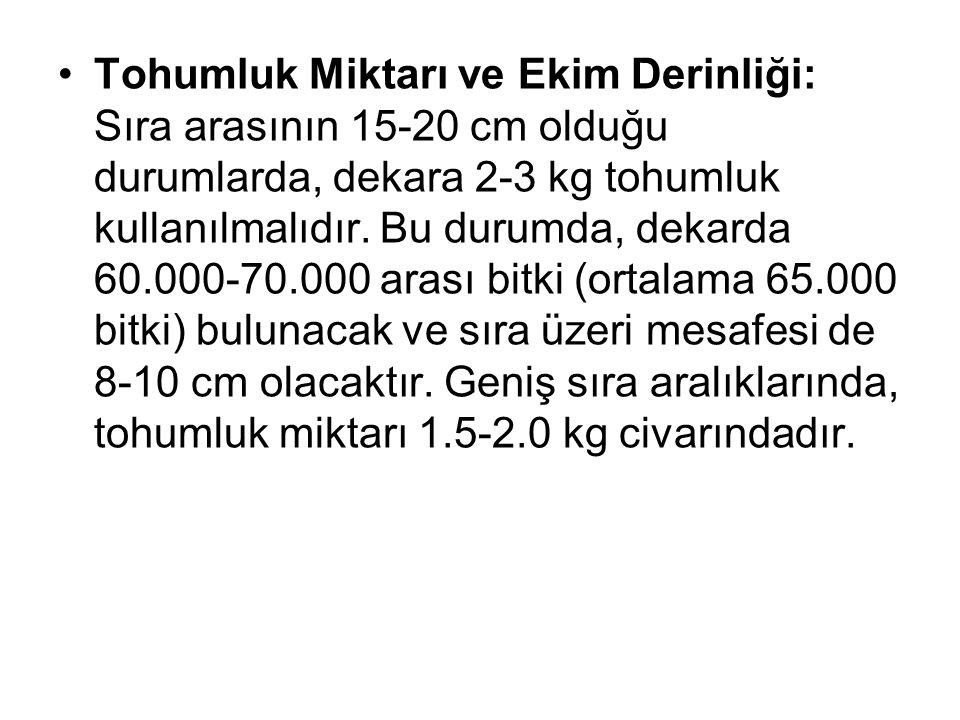 Tohumluk Miktarı ve Ekim Derinliği: Sıra arasının 15-20 cm olduğu durumlarda, dekara 2-3 kg tohumluk kullanılmalıdır.