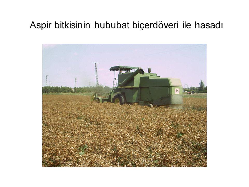 Aspir bitkisinin hububat biçerdöveri ile hasadı
