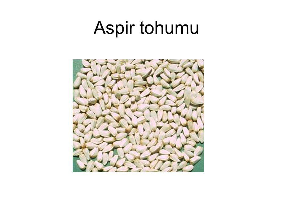 Aspir tohumu