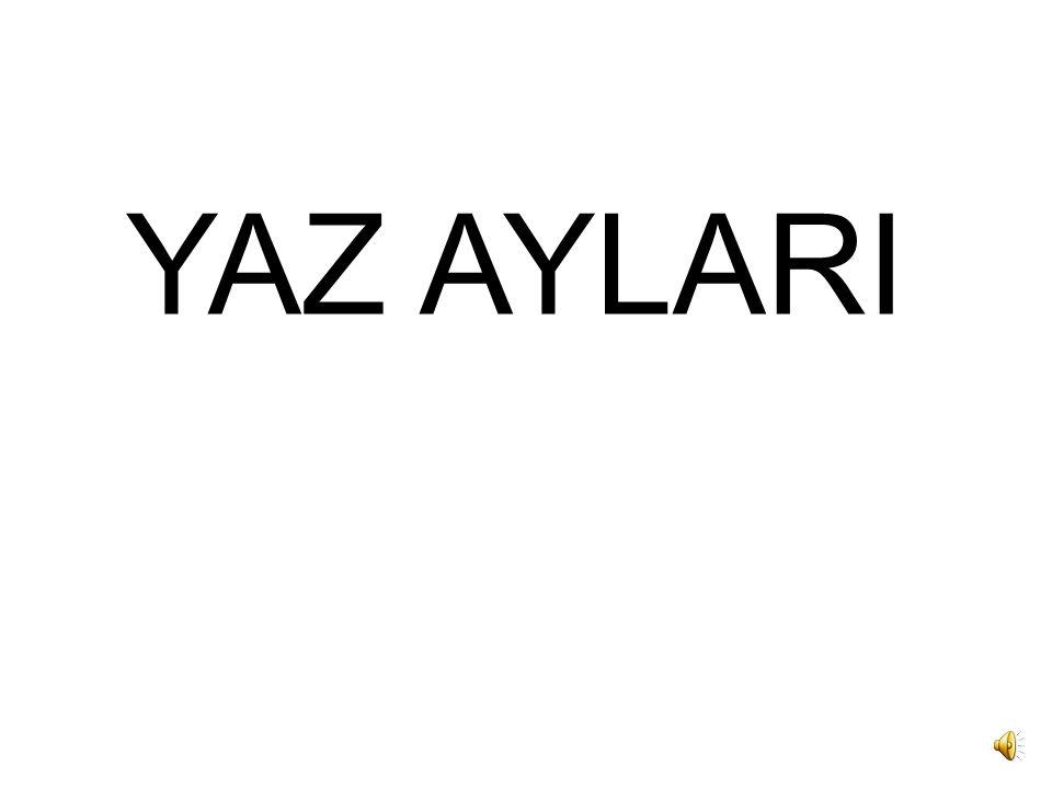 YAZ AYLARI