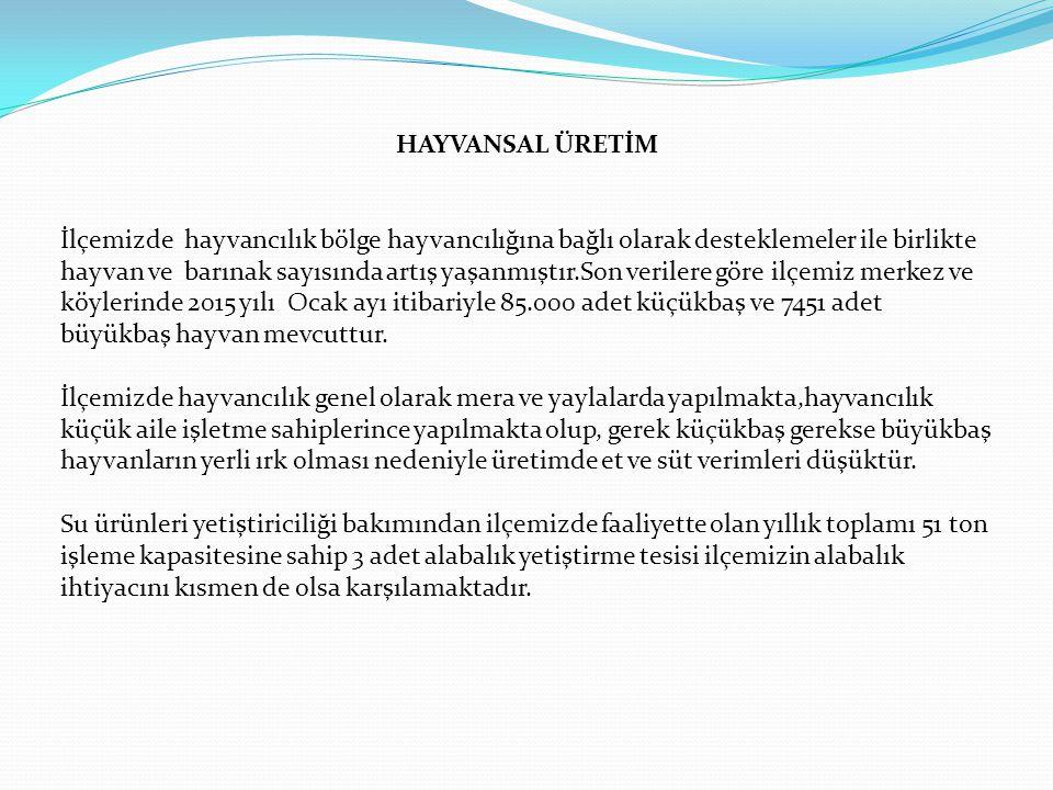 HAYVANSAL ÜRETİM