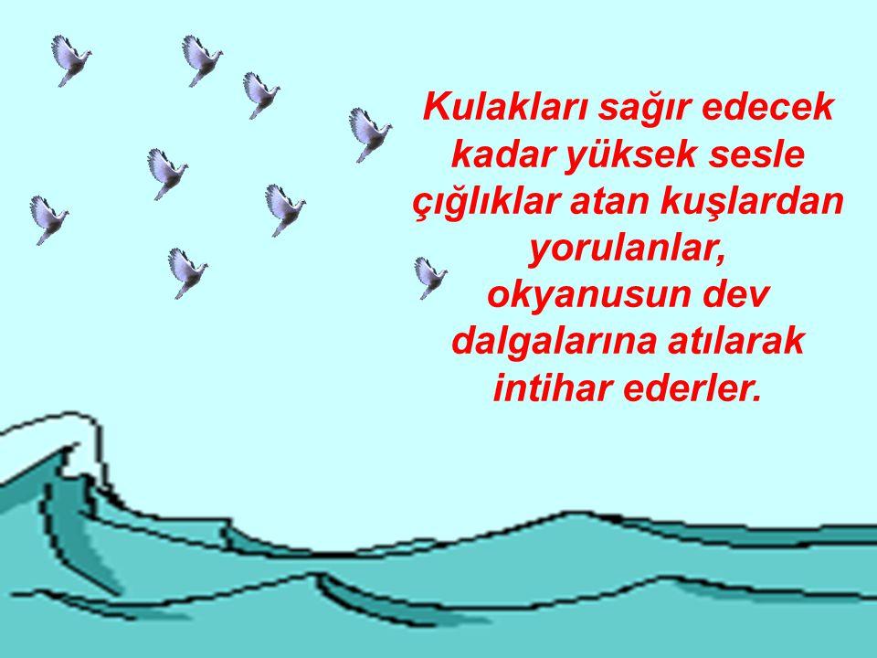 okyanusun dev dalgalarına atılarak intihar ederler.