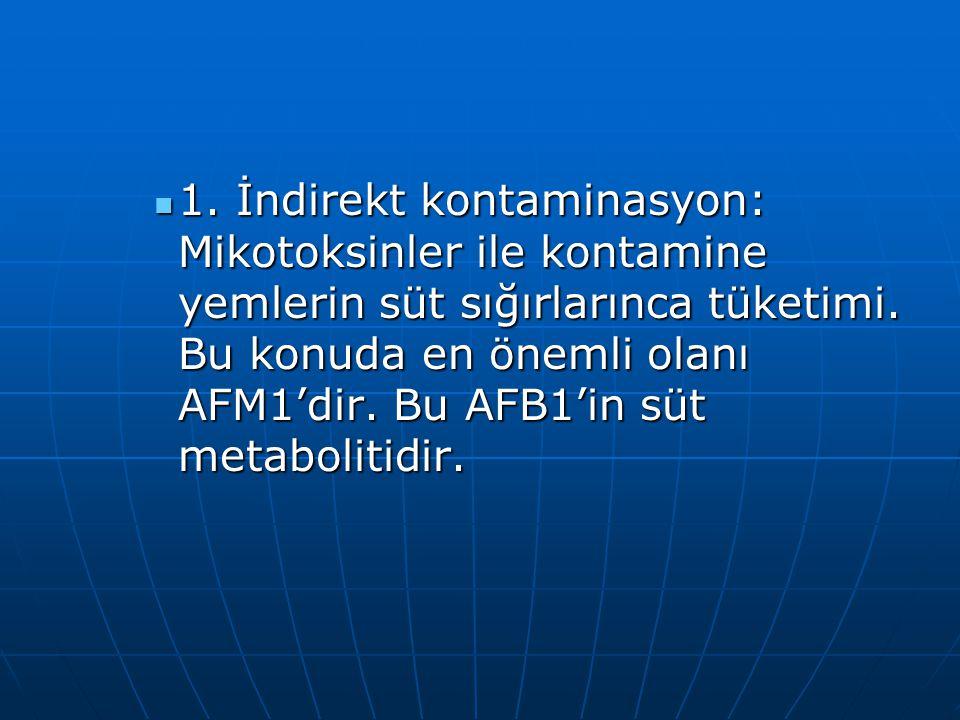 1. İndirekt kontaminasyon: Mikotoksinler ile kontamine yemlerin süt sığırlarınca tüketimi.