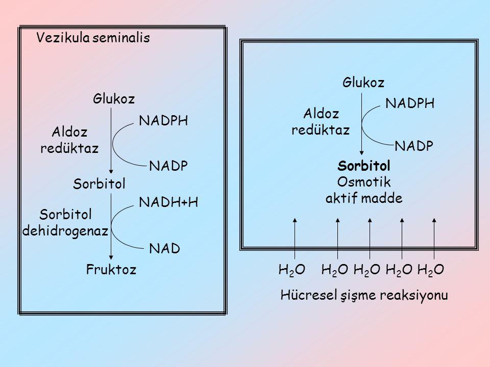 Hücresel şişme reaksiyonu