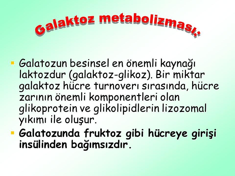 Galaktoz metabolizması: