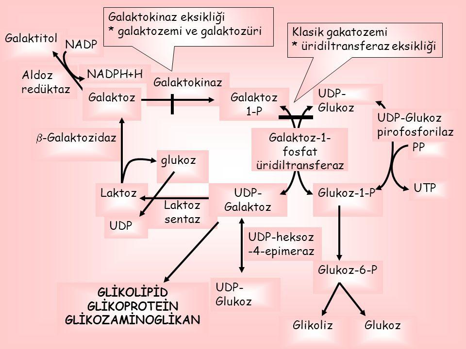 Galaktoz-1-fosfat üridiltransferaz
