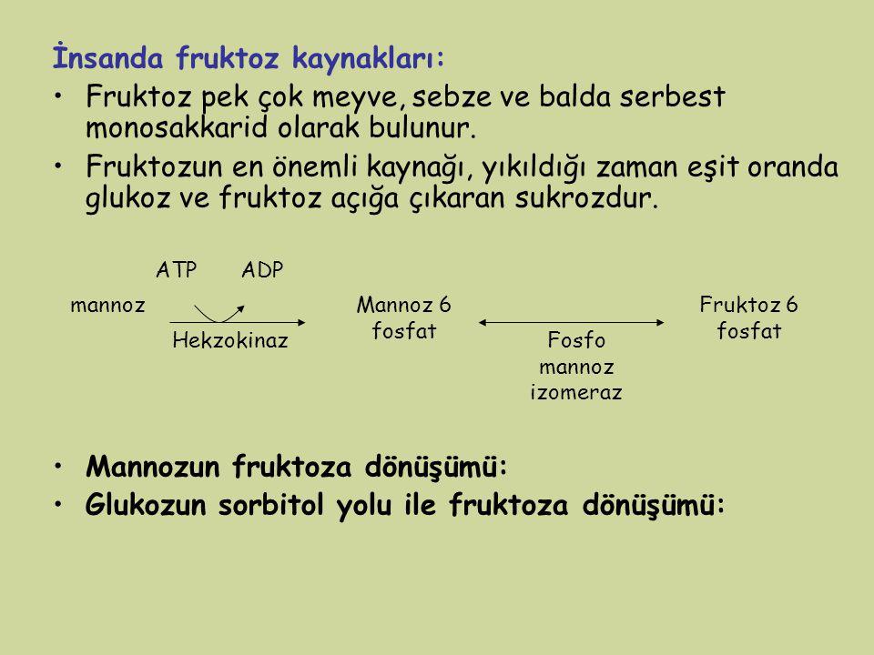 İnsanda fruktoz kaynakları: