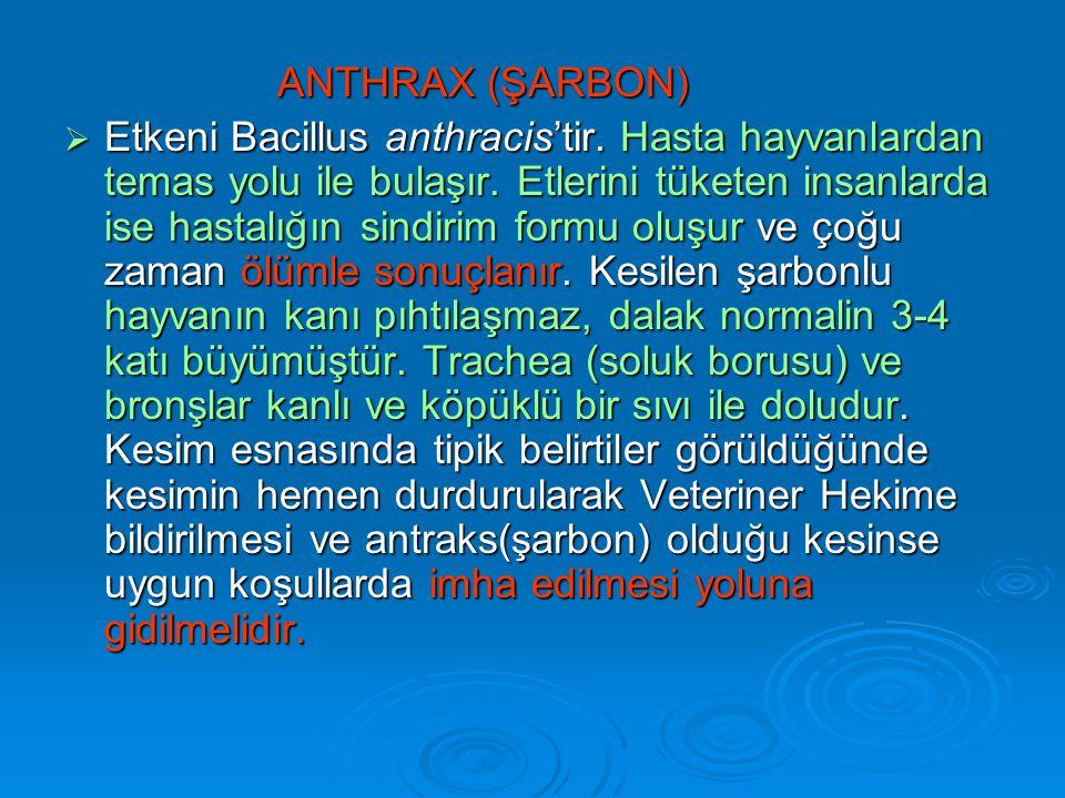 ANTHRAX (ŞARBON)