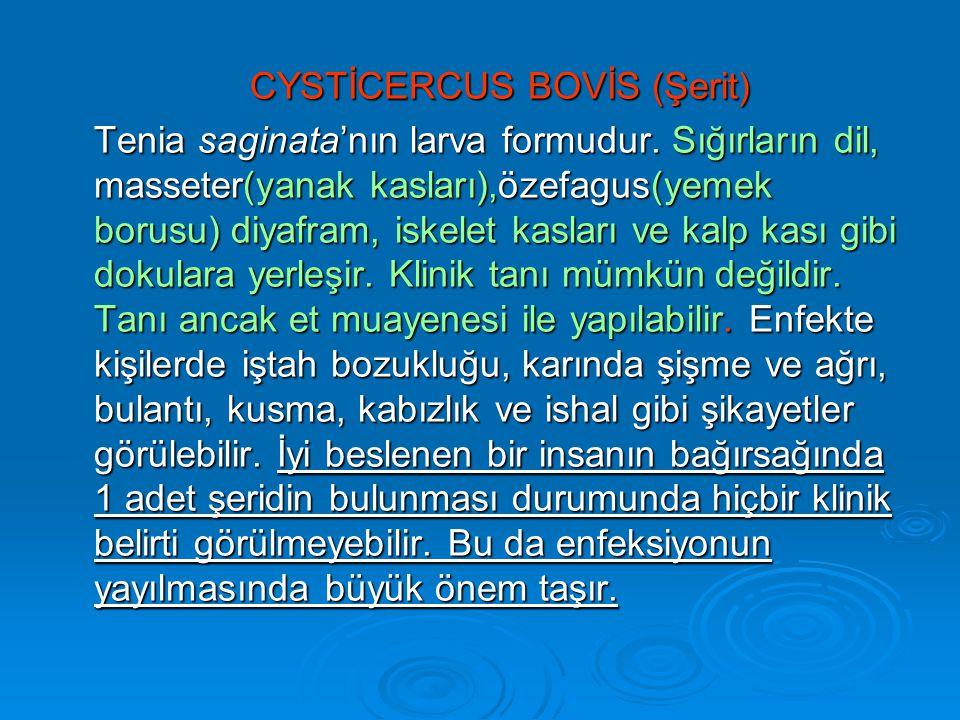 CYSTİCERCUS BOVİS (Şerit)