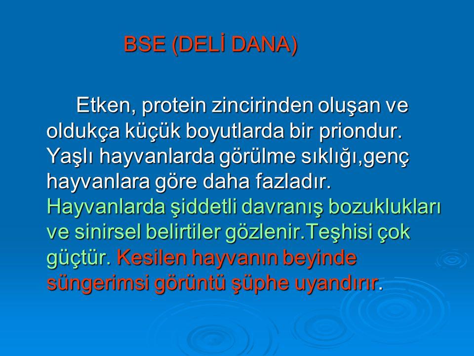 BSE (DELİ DANA)