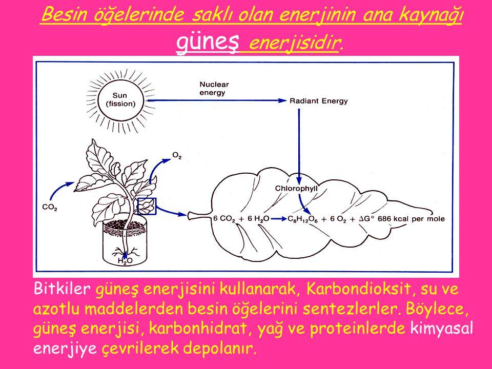 Besin öğelerinde saklı olan enerjinin ana kaynağı güneş enerjisidir.