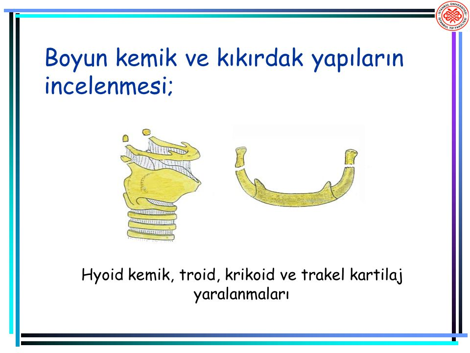 Boyun kemik ve kıkırdak yapıların incelenmesi;