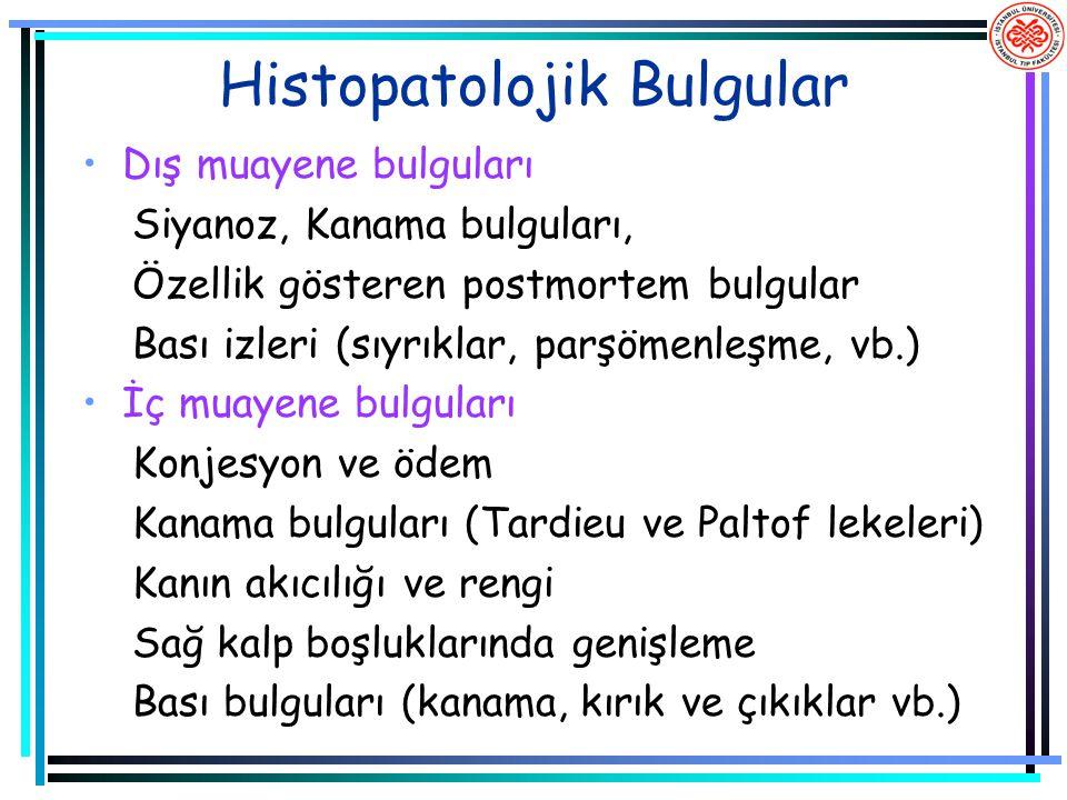 Histopatolojik Bulgular