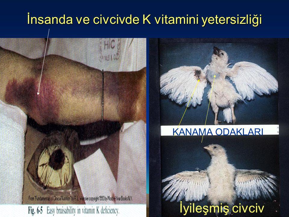 İnsanda ve civcivde K vitamini yetersizliği