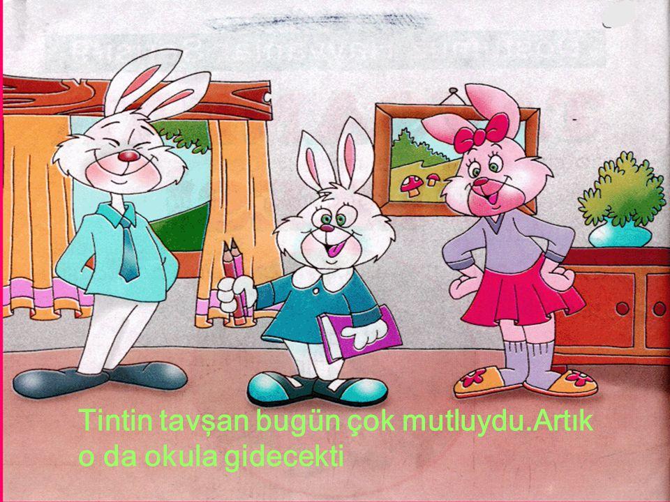 Tintin tavşan bugün çok mutluydu.Artık o da okula gidecekti
